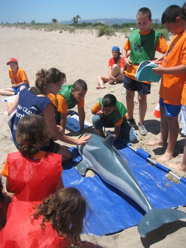 Salvant un dofí